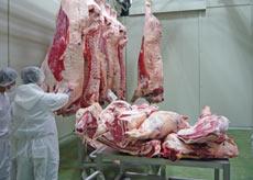 枝肉製造工程